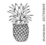 pineapple sketch isolated on... | Shutterstock .eps vector #1017343645