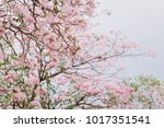 pink flower tree in the park....   Shutterstock . vector #1017351541