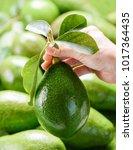 hand holding fresh green... | Shutterstock . vector #1017364435
