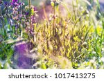 wet grass in sunny day | Shutterstock . vector #1017413275