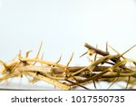 close up view of crown of... | Shutterstock . vector #1017550735