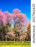 shot of beautiful cherry... | Shutterstock . vector #1017561625