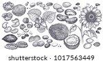 hazelnut  walnut  peanuts ... | Shutterstock .eps vector #1017563449