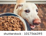 domestic life with pet. feeding ... | Shutterstock . vector #1017566395