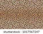 animal leopard brown beige... | Shutterstock . vector #1017567247