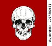 skull  skeleton head anatomy...   Shutterstock .eps vector #1017580651