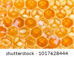extreme macro shot of a honey... | Shutterstock . vector #1017628444