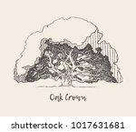illustration of an old oak tree ... | Shutterstock .eps vector #1017631681