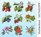 set berries. raspberry ...   Shutterstock .eps vector #1017632599