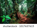 mysterious landscape of foggy... | Shutterstock . vector #1017637615