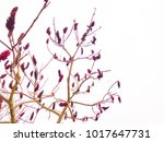 purple brunches and flora | Shutterstock . vector #1017647731