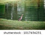 beautiful blue heron bird... | Shutterstock . vector #1017656251