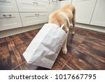 naughty dog in home kitchen.... | Shutterstock . vector #1017667795