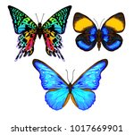 set of color images of a... | Shutterstock .eps vector #1017669901