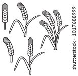 wheat ear icon set   Shutterstock .eps vector #1017688999