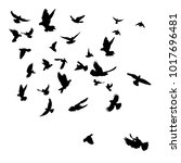 vector silhouette flying birds  ... | Shutterstock .eps vector #1017696481