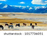 horses of south park  colorado | Shutterstock . vector #1017736051