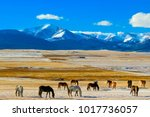 horses of south park  colorado | Shutterstock . vector #1017736057