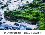 Green Surface  Plant And Moss ...