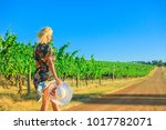 scenic landscape of vineyard... | Shutterstock . vector #1017782071