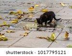 Black Street Kitten Drinks The...