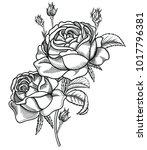 vector illustration of flowers... | Shutterstock .eps vector #1017796381