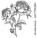 vector illustration of flowers...   Shutterstock .eps vector #1017796384