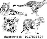 vector drawings sketches... | Shutterstock .eps vector #1017839524