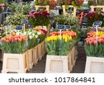 Bunches Of Tulips  Asters ...