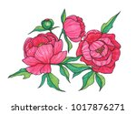 red peonies on white background | Shutterstock . vector #1017876271