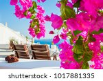 beautiful terrace with pink... | Shutterstock . vector #1017881335