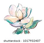 watercolor hand drawn sketch... | Shutterstock . vector #1017932407