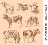 cows hand draw sketch | Shutterstock .eps vector #101794615