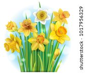 bouquet of yellow daffodils | Shutterstock .eps vector #1017956329