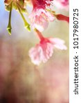 spring flowers. sakura | Shutterstock . vector #1017980725