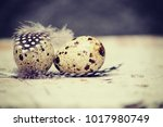 quail eggs background | Shutterstock . vector #1017980749