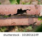 Small photo of Closeup of rusted, rusty, metal bars