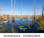 view of the okefenokee swamp of ... | Shutterstock . vector #1018022845