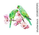 Rose Ringed Parakeet. Ring...