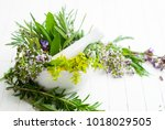 spice and herbal plants in a... | Shutterstock . vector #1018029505