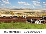 African farm  cattle  wide land ...