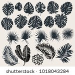tropical plant leaves vector... | Shutterstock .eps vector #1018043284