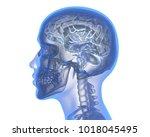 human brain over white... | Shutterstock . vector #1018045495