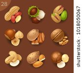 food ingredients. nuts | Shutterstock .eps vector #1018050067