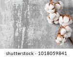 dried cotton plant flower on... | Shutterstock . vector #1018059841