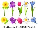 set of spring flowers iris... | Shutterstock .eps vector #1018072534