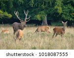 deer forest and lamb | Shutterstock . vector #1018087555