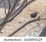 Small photo of Metallic Hued Plumage on a European Starling Perched on a Branch