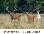 deer forest  deer forest deer | Shutterstock . vector #1018109065