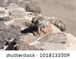 View On A Ground Squirrel With...